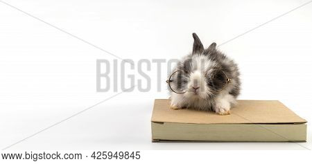Lovely Bunny Easter Black And White Wearing Eye Glasses Sitting On The Book Over Isolated White Back
