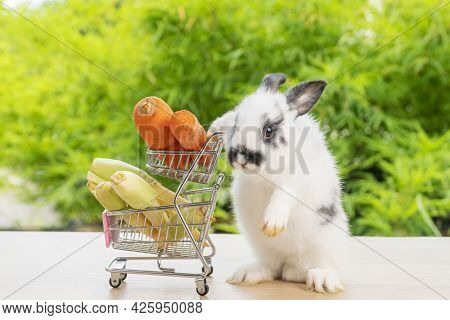 Easter Holiday Bunny Animal And Shop Online Concept. Adorable Baby Rabbit Black, Pushing Shopping Ba
