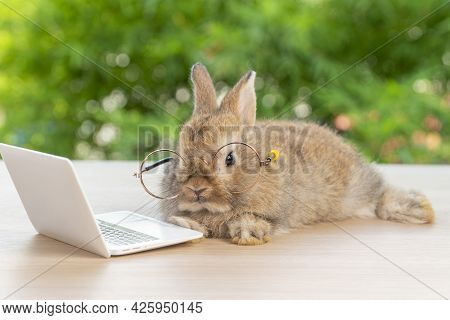 Easter Holiday Animal, Technology E-learning Concept. Baby Bunny Brown Wearing Eye Glasses With Lapt
