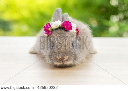 Grey Baby Bunny With White And Red Paper Roses On Own Head While Lying Down On Wood Green Bokeh Back