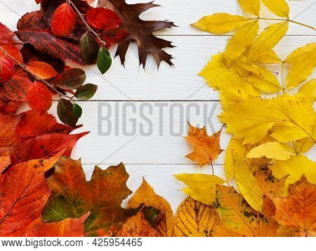 Bright Autumn Or Fall Leaves On White Wooden Table. Top View, Mockup, Flatlay. Cosmetics Product Adv