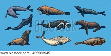 Fur Seal, Steller Sea Lion And Walrus, Ribbon And Elephant, Earless And Harbor Seal. Marine Creature