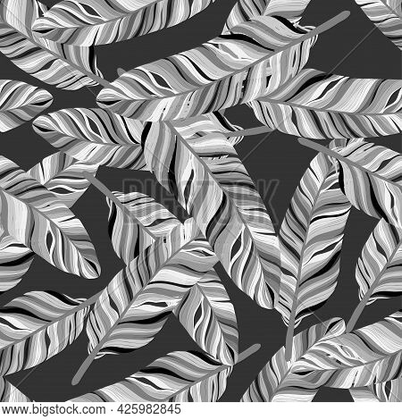 Vector Seamless Pattern Of Feather In Black, White And Light Gray Tone On Dark Grey Background, Hand