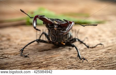 The Male Stag Beetle Sits On The Background Of A Rough Woody Texture.