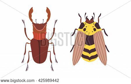Bug Species Set, Top View Of Rhinoceros Beetle And Wasp Insects Cartoon Vector Illustration