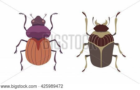 Bug Species Set, Top View Of Beetles Insects Cartoon Vector Illustration