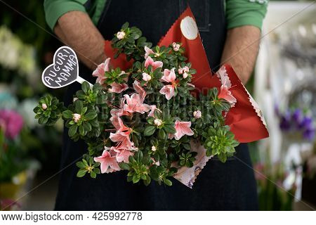 A Florist Holding A Vase Of Pink Azalea Flowers In His Hands With Lettering In Italian Congratulatio
