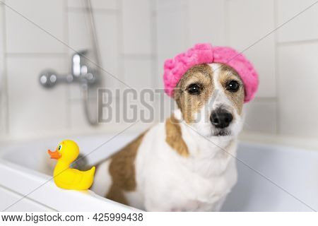 Sad Dog In The Bathroom With A Cap On His Head, Offended Pet Takes A Shower.