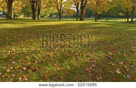 Public Park Gresham Oregon.