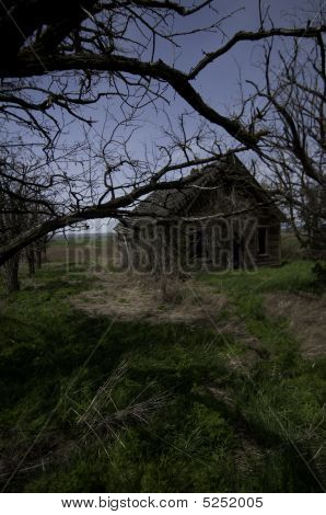 Over Grown And Forgotten House.