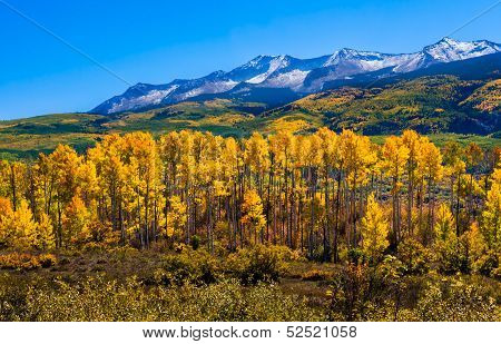 Beautiful Colorado with Aspen Trees in Autumn