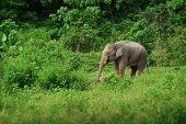 The female elephant near the rainforest. Thailand poster