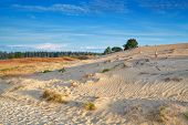 gold morning sunlight over sand dunes Drents-Friese Wold Netherlands poster