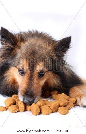 Eating Dog
