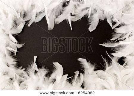 White Feather Border