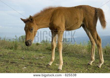 Newly Born Horse