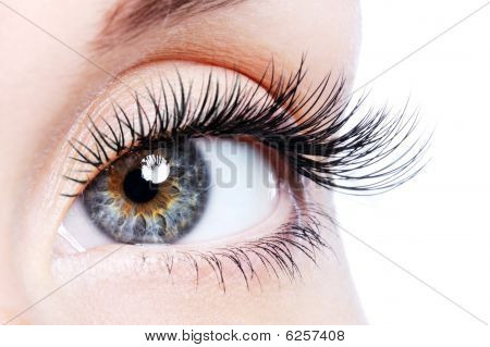 Beauty female eye with curl long false eyelashes - macro shot over white background poster