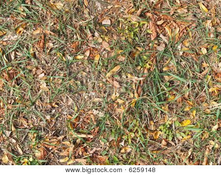 Yellow And Green Autumns Of A Grass And Dry Leaves