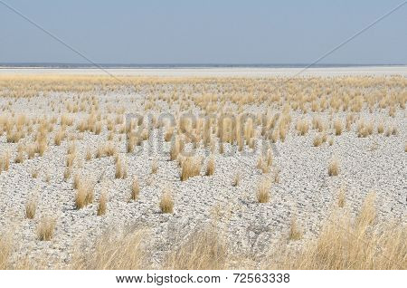 White clay and grass landscape at Fischer's Pan Etosha National Park Namibia poster
