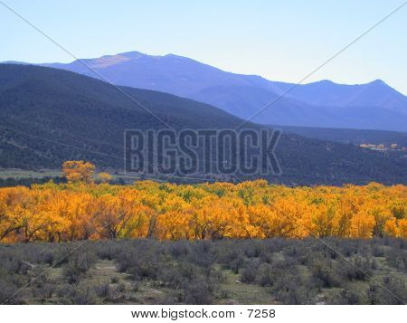 Fall Color Near Parachute, Colorado