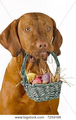 Dog Holding Easter Basket