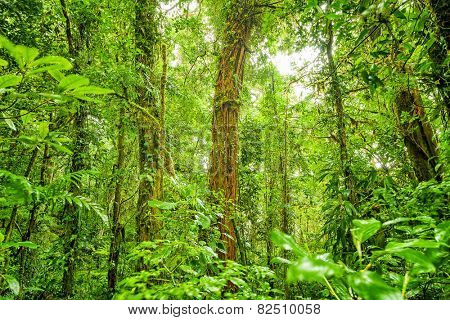 Rein forest background, fresh green jungle natural landscape, beautiful dense cloud forest, exotic tropical nature, wild Costa Rica, Central America
