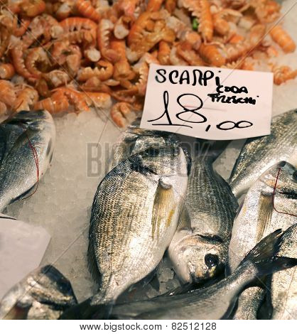 Scampi And Gilthead Bream For Sale In The Market