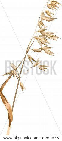 Vector oats.