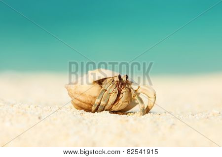 Hermit crab on beach at Maldives