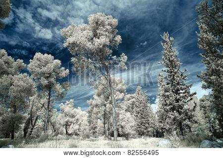 Infrared Winter Forest Landscape.