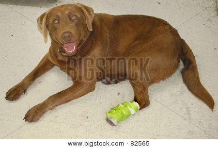 poster of dog with hurt foot