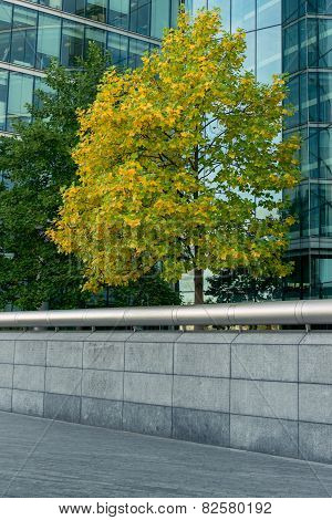 Trees in downtown surrounded by glass office buildings