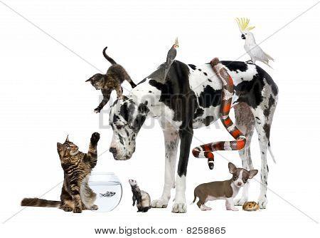 Agrupar de mascotas frente fondo blanco