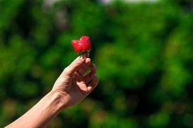 Fresh Strawberry On Trees Background