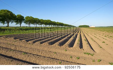 Furrows in a sunny  plowed field in spring