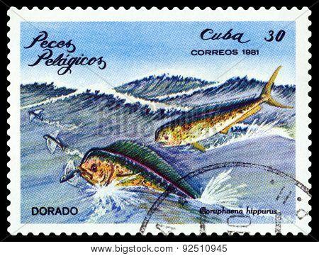 Vintage  Postage Stamp. Coruphaena Hippurus.