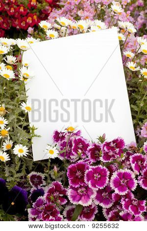 Flowers And Copyspace