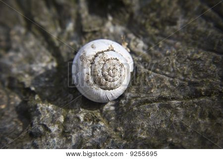 A Crusty Old Shell