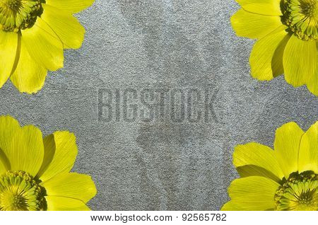Flowers And Texture