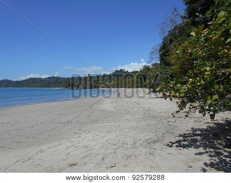 gorgeous sunny sandy beach with a treeline
