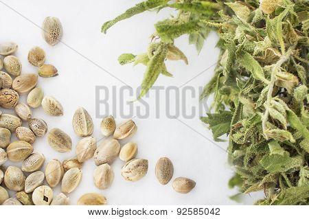 Hemp Seeds And Dried Cannabis Twig