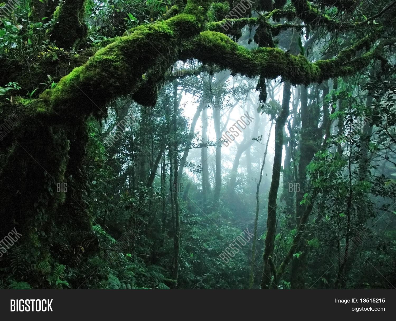 Tropisch Afbeelding En Foto Gratis Proefversie Bigstock