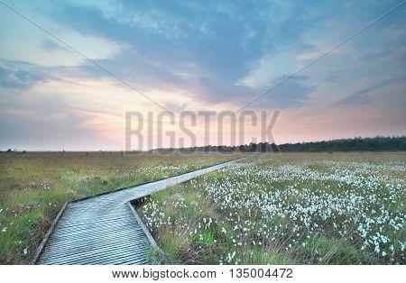 wooden path on swamp at sundown Drenthe Netherlands