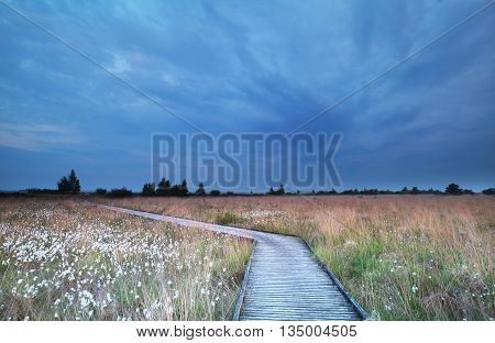 wooden path on swamp with cotton-grass in summer