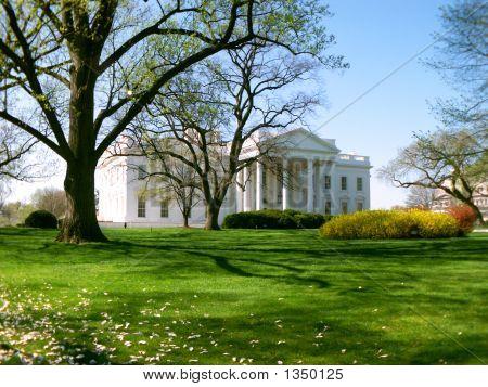 White House Springtime