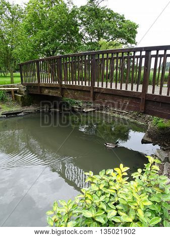 Ducks and bridged river photographed at Outen in Norfolk