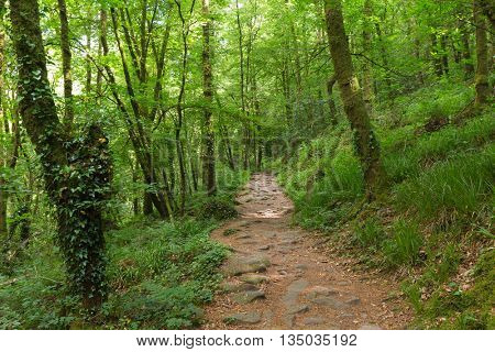Green temperate forest in Brittany, France