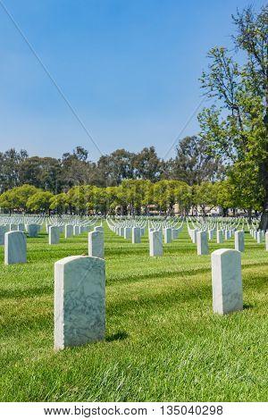 Field Of White Headstones