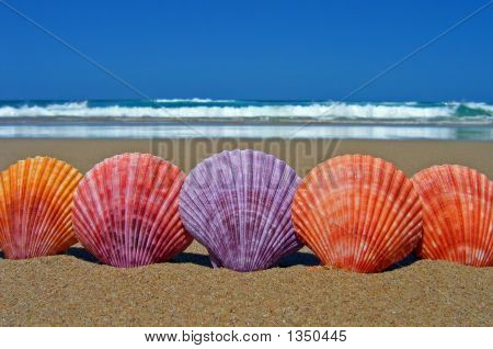 Five Scallop Sea Shells