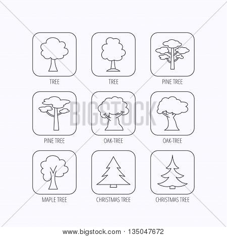 Pine tree, maple and oak icons. Christmas trees linear signs. Forest trees flat line icons. Flat linear icons in squares on white background. Vector